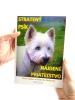 Stratený psík - nájdené priateľstvo - fotografia 5