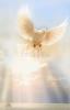 Obrázok: Ranná modlitba k Duchu Svätému (Z016) - laminovaný